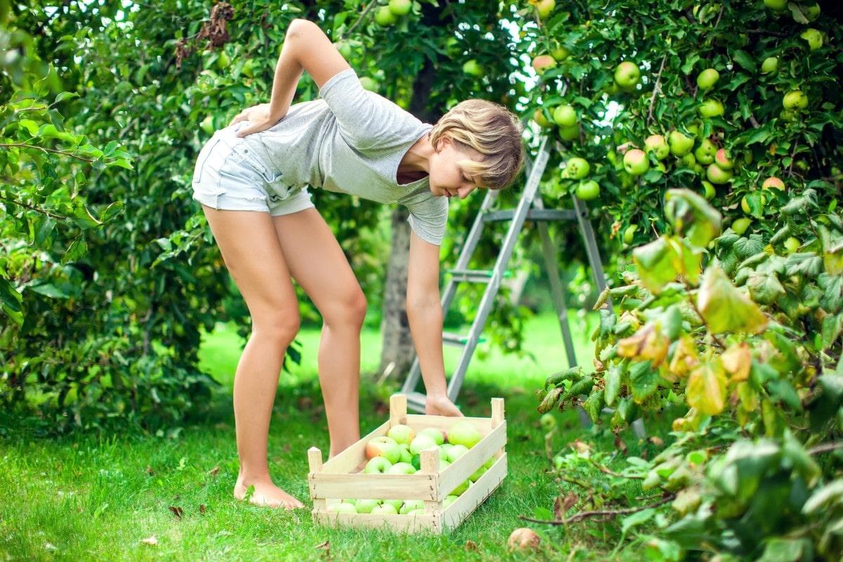Jak pracować w ogrodzie, żeby uniknąć bólu pleców w odcinku lędźwiowym?